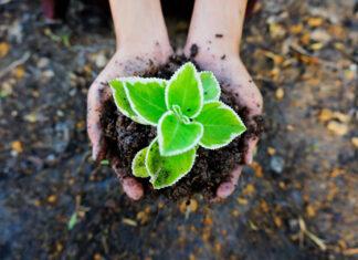 Wysiew nasion – kiedy kupować nasion